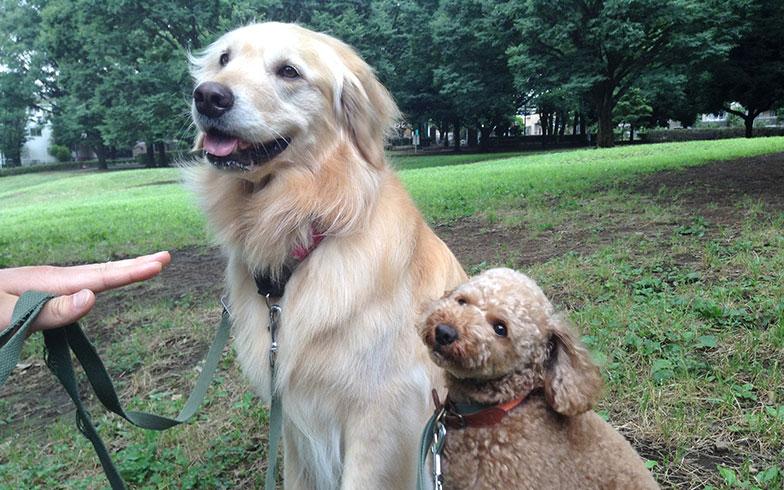 家庭犬しつけインストラクターに聞く! 犬と楽しく住める街や家ってどんなところ?