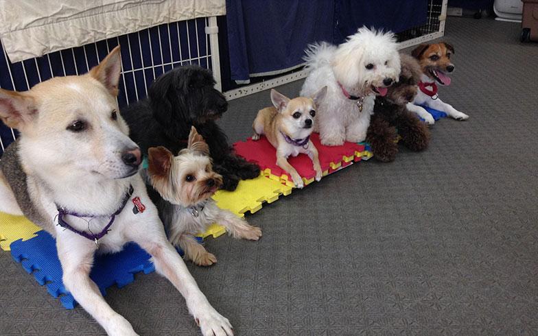【画像2】トレーニングされた家庭犬は、預かりでもお友達と仲良く「待て」ができる!(画像提供/Can! Do! Pet Dog School)