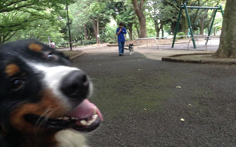 【画像3】「公園大好き!」こんな顔されると、飼い主も歩かざるを得ず…これが犬オーナー元気の源(画像提供/Can! Do! Pet Dog School)