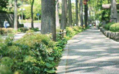 【画像1】メインストリートの歩道(夏季撮影)。美観維持のために管理組合が出資して植栽を手入れした(写真撮影/相馬ミナ)