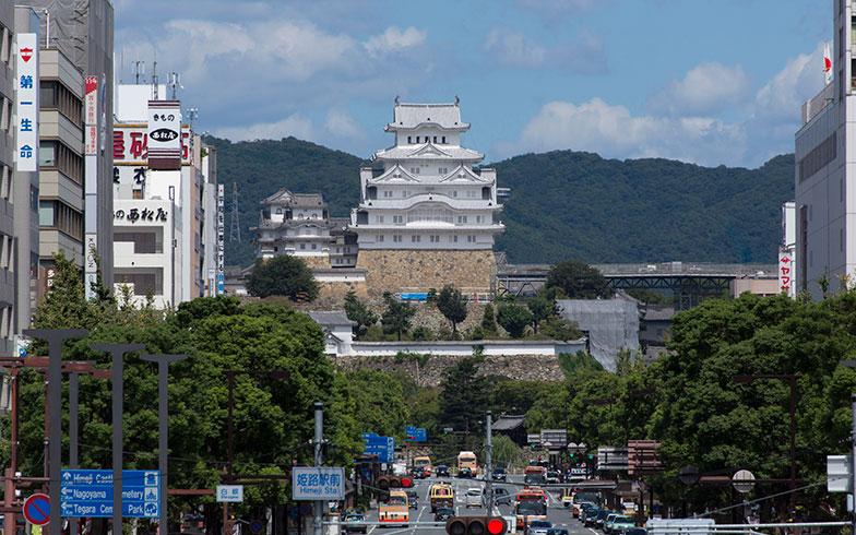 【画像2】姫路駅から姫路城へ続く大手前通り。人通りがあり、うっそうと茂る並木が続く通りは、ムクドリのねぐらに最適のようです(写真/PIXTA)