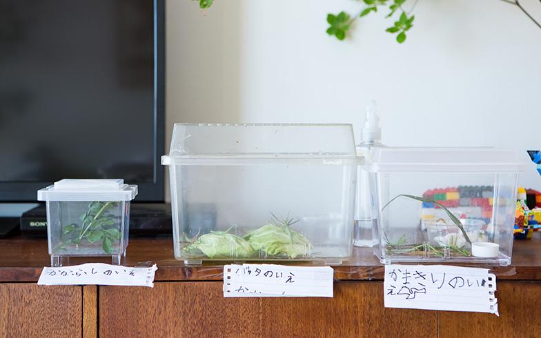 【画像6】左から「ななふしのいえ」「バッタのいえ」「かまきりのいえ」。虫たちの家は大きさも形も違いますが、色を半透明で統一しているため悪目立ちせず、インテリアに溶け込んでいました(写真撮影/片山貴博)