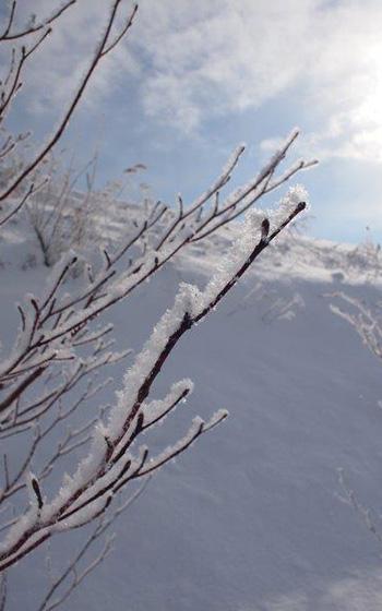 【画像5】明子さんが感激のあまり涙したという樹氷を撮影した1枚。早朝、キラキラと輝くダイヤモンドダストも見られたそう。(写真撮影/熊田誠治)