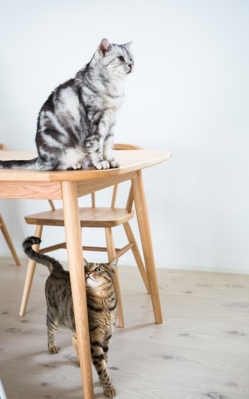 【画像5】無印良品の木製テーブルもお気に入り、長男(上)と四男(下)(写真撮影/片山貴博)