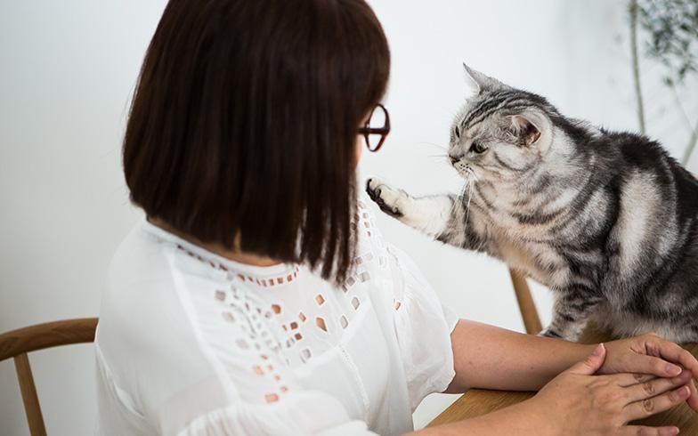 【画像6】「僕の話も聞いて!」とばかりに、取材に割り込む長男。猫たちのモデルっぷりがスゴい!(写真撮影/片山貴博)