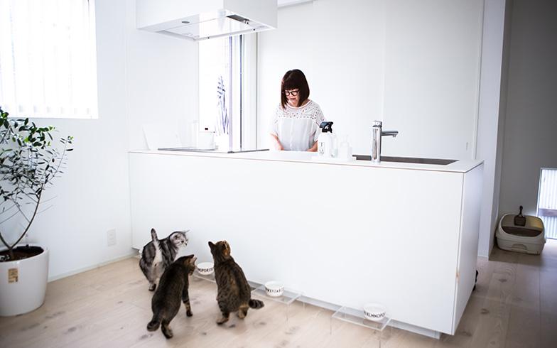 【画像8】みーさんがキッチンに立つと、猫たちが集まってきて「ごはん!?」(写真撮影/片山貴博)