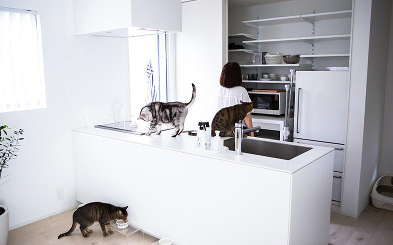 【画像9】オープンキッチンの背面が収納スペース。冷蔵庫や電子レンジも引き戸内に隠しスッキリ。「一人暮らしなので、収納は十分余っています」(写真撮影/片山貴博)