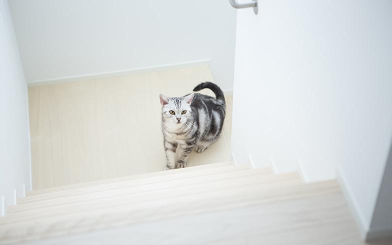 【画像16】壁穴を抜けて、階段へ。13歳の長男も初の階段生活を満喫(写真撮影/片山貴博)