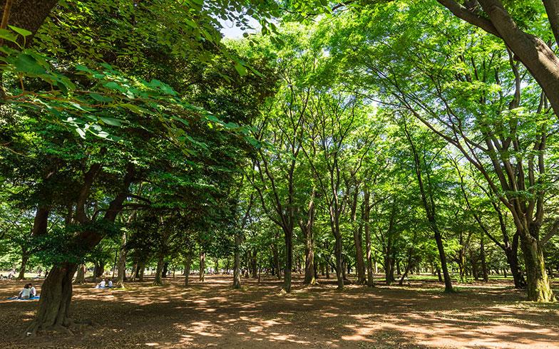 【画像1】代々木公園は渋谷近辺にある最大の公園。思い立ったら遊びに来れるのも自転車ならでは(写真/PIXTA)