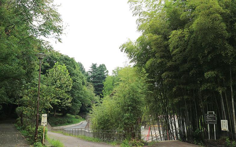 【画像3】「江古田の森公園」はとにかく緑が多く、散歩するだけで癒やされそう(写真撮影/SUUMOジャーナル編集部)
