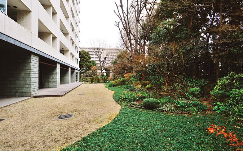 【画像1】建物南側に広がる庭。芝生が枯れてしまったこともあるそうだが、売主と施工会社に協力を要請し、土壌の入れ替えを実施。見事に復活した