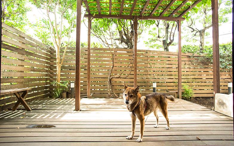 【画像14】川上犬は長野県指定の天然記念物。ハッピーは藤原家で出産2回を経験し、その保存活動に4匹貢献。詳しくは「よのなかnet」藤原さんホームページにて(写真撮影/片山貴博)