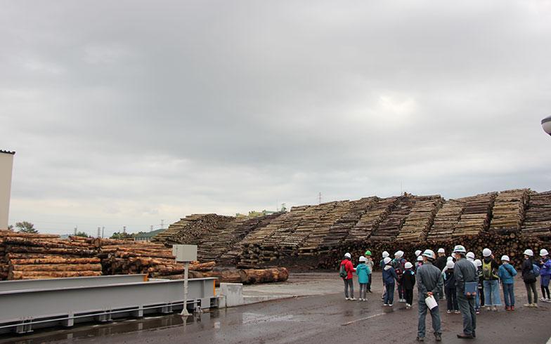 【画像5】発電所の敷地内に運び込まれた北海道産の間伐材。半年以上かけて乾燥させる(写真撮影/田方みき)