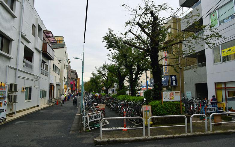 【画像5】駅前や住宅街に街路樹が整備されている(写真撮影/小野洋平)