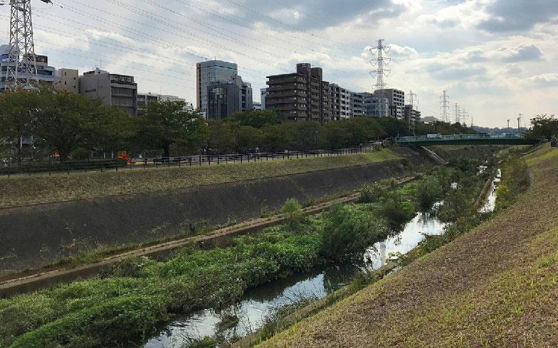 【画像9】一級河川・鶴見川の支流である鳥山川の河川敷(写真撮影/小野洋平)