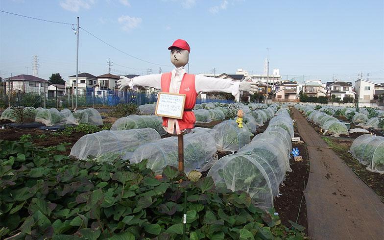 都市のど真ん中で農業? 初心者から本格派まで楽しめる可能性を探った