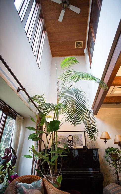 【画像7】「大きな植物を育てるために、吹抜けをつくったの」と横山さん。インドア・ガーデンで、ケンチャヤシがすくすくと3m以上に育っている(写真撮影/片山貴博)