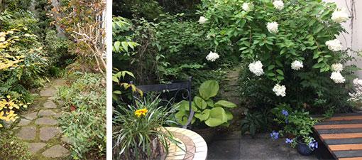 【画像10】素人仕事には見えない石畳。自然に生えたコケが雰囲気ある小径(こみち)、庭の奥へと続く(写真撮影/片山貴博)。右写真は夏、アジサイの一種ノリウツギが咲いている写真(横山さん撮影)