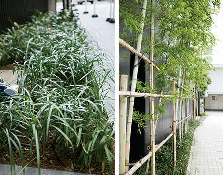 【画像2】(左)エントランス右横にある植栽。無償で植え替え・自動灌水設備導入をしてもらった (右)エントランスの対面にある竹垣にも無償で灌水設備を導入してもらった(写真撮影/中垣美沙)
