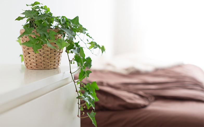 【画像5】部屋の中に植物があると、空気の流れが良くなり、癒しの効果もあるのだとか(写真撮影/アウル株式会社)