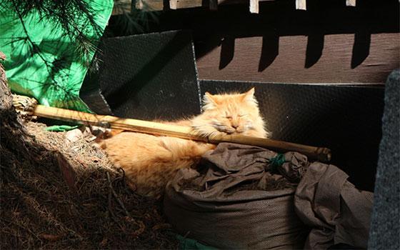 散策中に出会ったネコ(写真撮影/SUUMOジャーナル編集部)