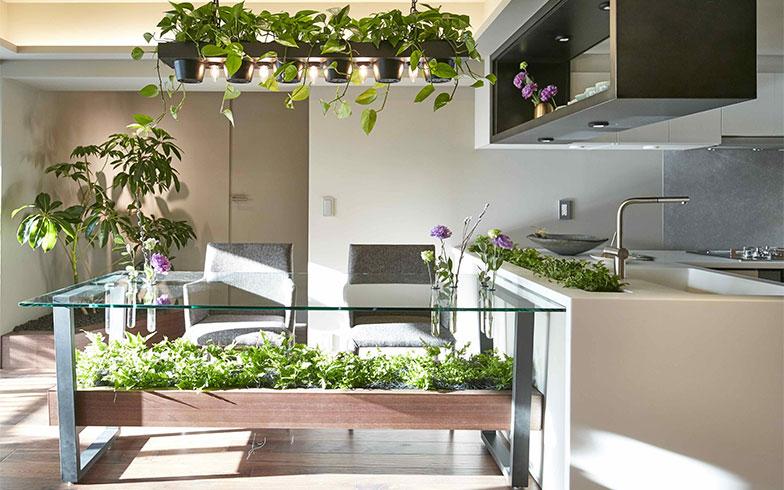 キッチンまわりの水耕栽培では、ハーブを育てるのもおすすめ(画像提供/グローバルベイス株式会社)