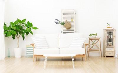 すぐ枯らしていない? お部屋の環境に合った観葉植物の選び方を教えて!