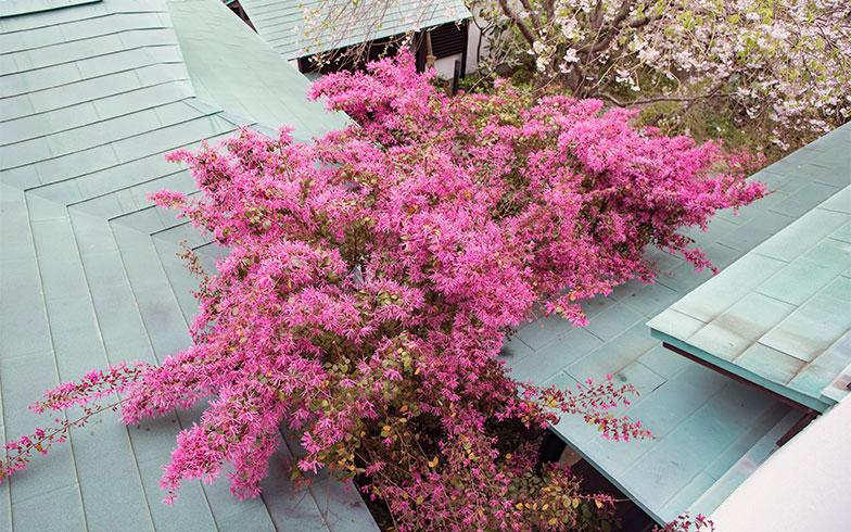 2階寝室の眼下には、入母屋造りの緑青屋根が重なり、マンサクのピンクの花が広がっていた(写真撮影/片山貴博)