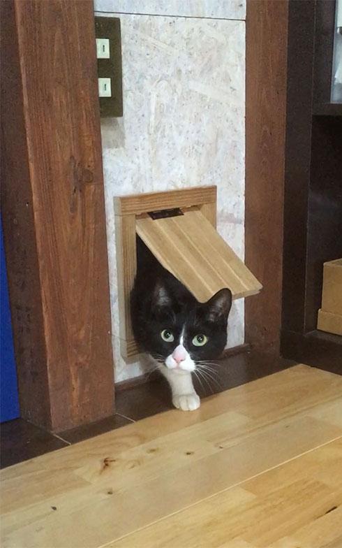 猫の元気くんの通り抜け用ドアも手づくりだ(写真提供/中原氏)