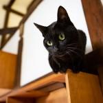 猫3匹までOK! 猫を飼うことが条件の「ねこのいえ」は人と暮らすための工夫がいっぱいだった