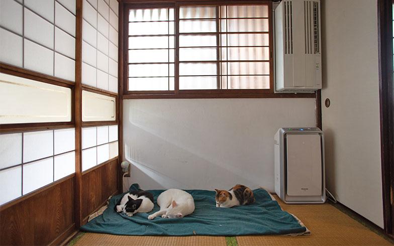 「家の中が快適であれば脱走したがらない」といしまるさん。まさに快適スポットになっている電気毛布に集まる猫たち。玄関に近い部分ですが、家を出たがらないそうです。入居した猫に合わせて脱走防止の格子なども後から付けているとか(写真撮影/片山貴博)