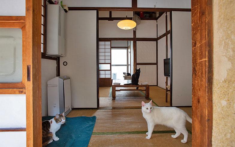 いしまるさんのお宅は床面に接する物が少なくてとてもシンプル。掃除がしやすいよう意識的に行っているそうです(写真撮影/片山貴博)