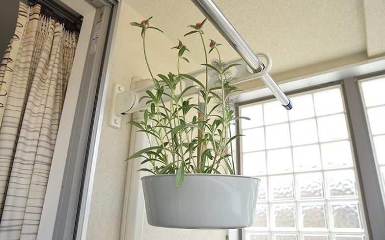 こちらはIKEAで入手したという吊るせる鉢植え。ベランダの竿受けのようなデッドスペースも緑で埋めることができる(撮影/末吉陽子)