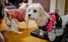 """ペット""""可""""ではなく""""共生""""。犬も猫も一緒に暮らすシェアハウスの魅力とは"""
