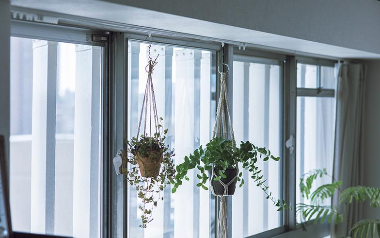 窓の外には視界を遮る物がなく、カーテンが不要なほど。カーテンレールは今や、植物をつるすために機能している(写真撮影/masa(PHOEBE))