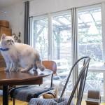 スター猫のお宅訪問![2] フォロワー6万人!インスタで人気の「Niko&Poko」の暮らし