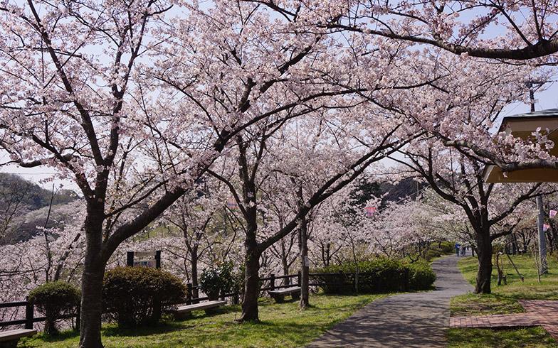 春の塚山公園(写真/PIXTA)