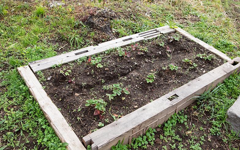 近所の方の薪割りを手伝ったときにいただいたイチゴの苗。廃材でスペースをつくり植えてみた。どうやって育てるのか悩むより、まずはやってみることが大事だそう(写真撮影/片山貴博)