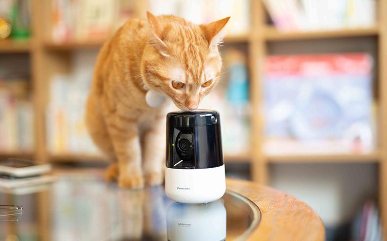 2019年の猫ガジェット最新事情がすごい。トイレに給餌器、カメラを使ってみた