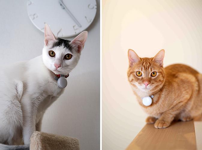 スラリと伸びた手足が美しい。めっちゃ美猫のピニャさん(左)。やんちゃなクスさん(右)はお腹をみせてくれる歓迎ぶり。ともに保護猫ですが、縁あって岸田さんと一緒に暮らしています(撮影(左)/嘉屋恭子、写真提供(右)/岸田祐佳さん)