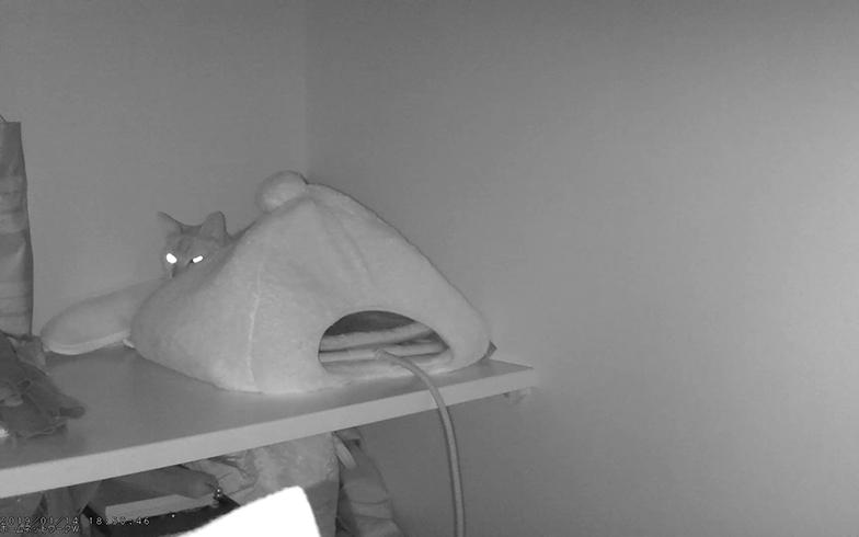 ちなみに、保護したヤマネコみたいな写真が夜間に撮れました。気分は動物番組です(撮影/嘉屋恭子)