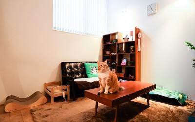 """スター猫のお宅訪問[3] インスタで国内外の人気者! """"お太りさま""""猫・ぐっぴーの暮らし"""