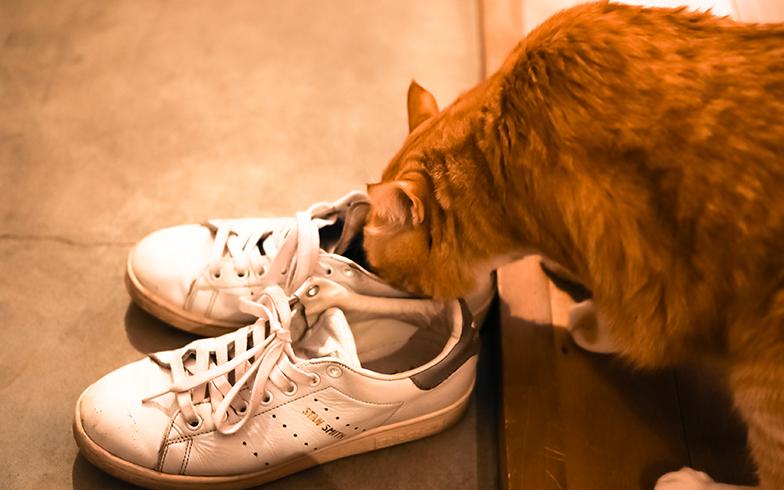 履き古した靴の臭いが好きなんだそう。撮影時もスタッフの靴を一足ずつチェック(写真撮影/片山貴博)