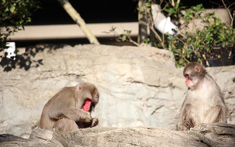 よこはま動物園ズーラシアのサル(写真提供/PIXTA)