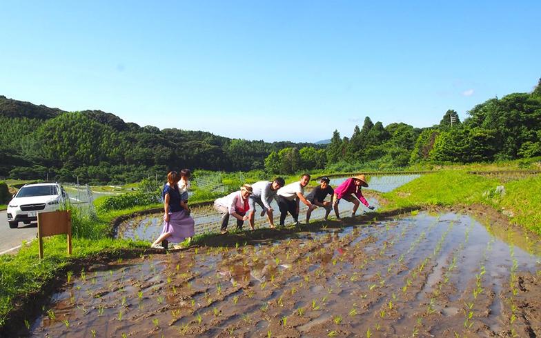 Qrossでの社会実験2.「田んぼ部」。都心の天神から車で30分ほどの糸島で田んぼを借りて自分たちのお米を育てる。手植えから脱穀まで、プロの指導を仰ぎつつ自分たちで管理(写真提供/Qross)