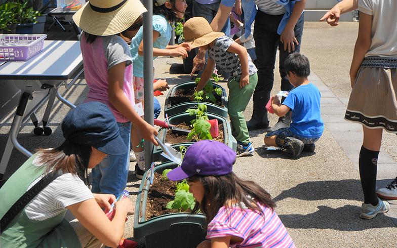 三郷市立ピアラシティ交流センターで恒例となったグリーンカーテンの植付イベントの様子。毎年5月中旬から下旬にかけて実施(画像提供/日比谷花壇)
