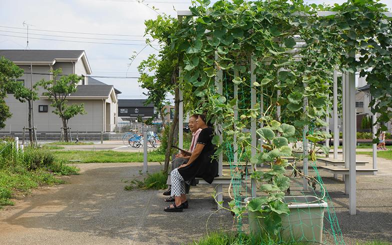 ヒョウタンのグリーンカーテン。藤棚やテント状に組んだ柵などにツルを這わせると、緑の屋根のようにもアレンジできる(画像提供/日比谷花壇)