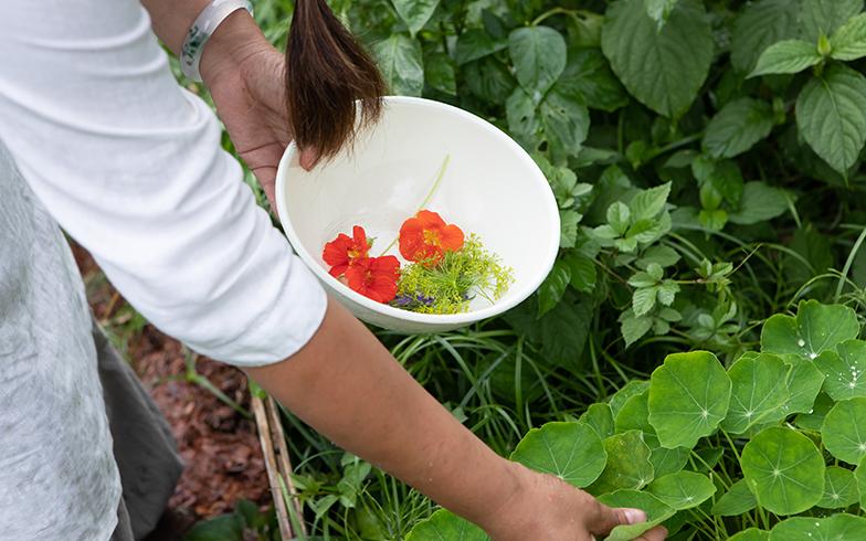 庭にはハーブや果実を収穫できる植物が生育。今日は、サラダの彩りに、食べられる花、エディブルフラワーを摘む贅沢さ(写真撮影/片山貴博)