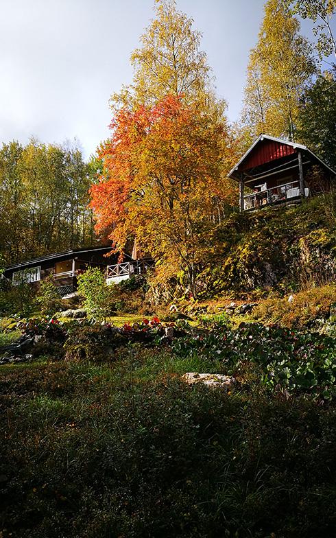 フィンランド語の「ruska」は、「紅葉」や「秋の色」を意味する言葉。この言葉の通り、秋には、色づいた森の広葉樹や針葉樹が鮮やかにサマーハウスの周りを彩る(写真提供/オッリさん)