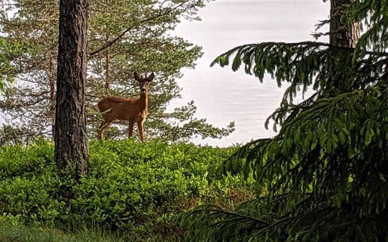 サマーハウスの周辺には、鹿などの野生動物もしばしば出没。これぞ自然と共存するシンプルライフの醍醐味(だいごみ)だ(写真提供/SUUMOジャーナル編集部)